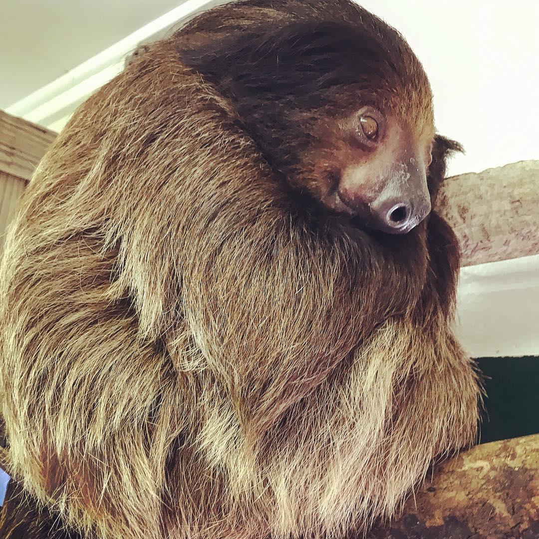 Panama City Beach Things To Do - ZooWorld Zoological Conservatory - Original Photo