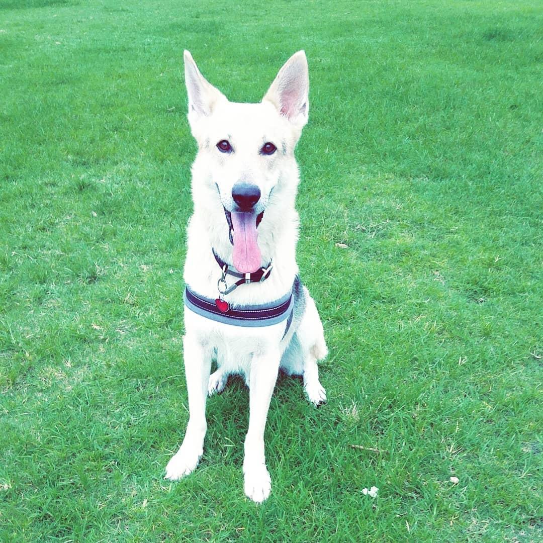 Destin Things To Do - Destin Dog Park - Original Photo