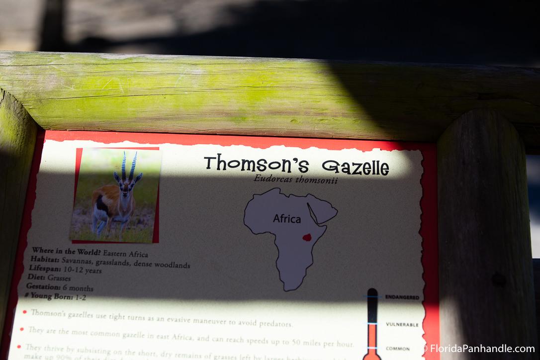 Pensacola Beach Things To Do - Gulf Breeze Zoo - Original Photo