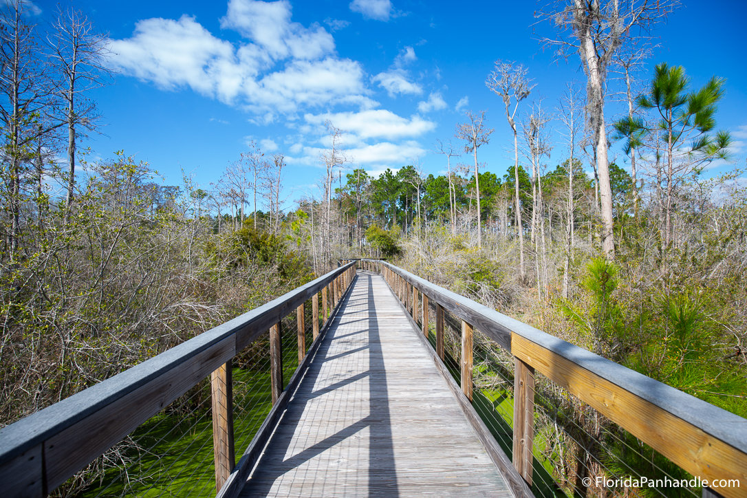 Panama City Beach Things To Do - Panama City Conservation and Wetland Park - Original Photo