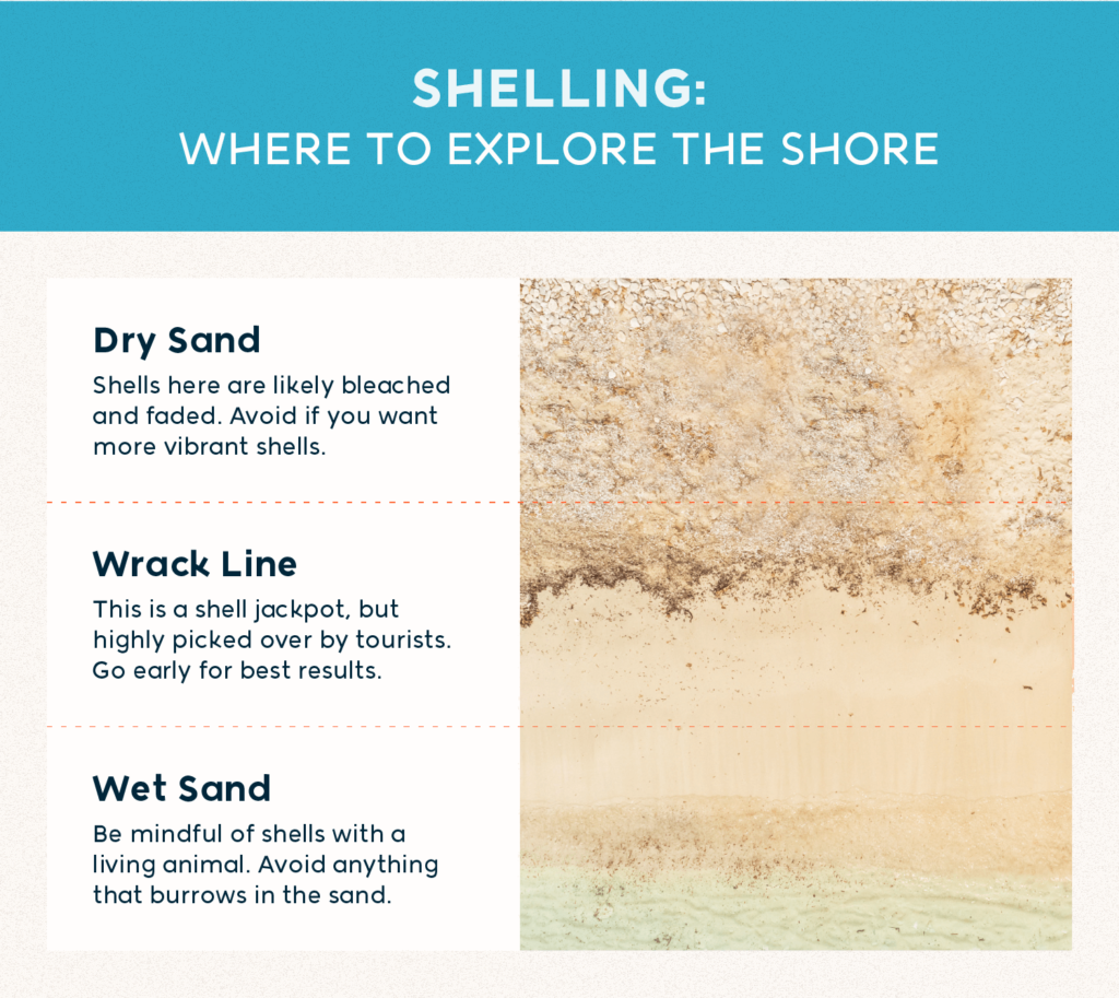 Shelling: where to explore the shore