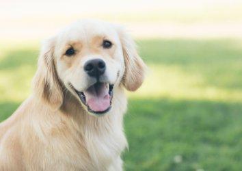Dog-Friendly Destin: Top Activities to Enjoy With Your Four-Legged Companion