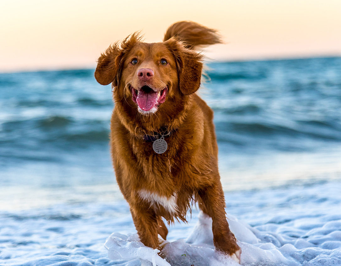 5 Dog-Friendly Activities in Cape San Blas/Port St. Joe