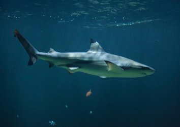 Are There Sharks in Destin? (And What to Do If You Run Into One)