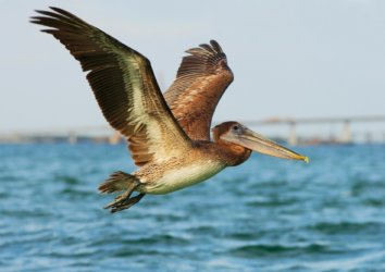 Pensacola Birdwatching Guide: Experience this Prime Birding Locale