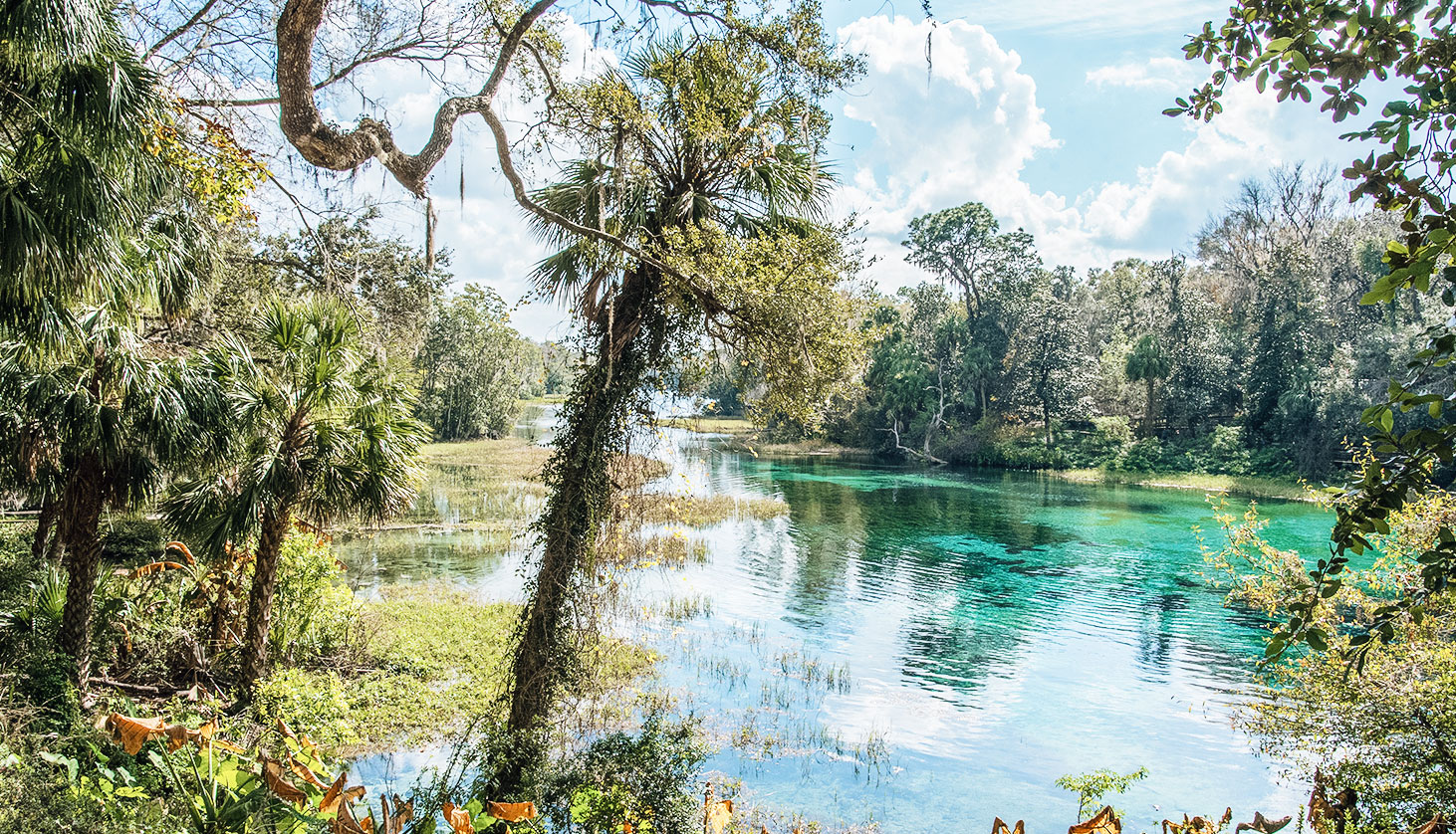 45 Florida Springs by Region and What They're Known For