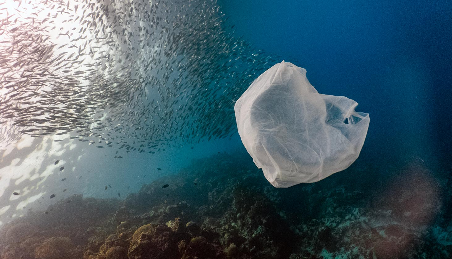 6 Wild Ways We're Cleaning Ocean Trash