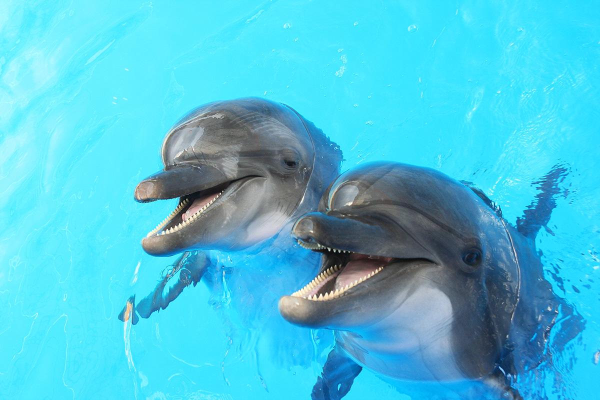 Panama City Beach Dolphin Guide