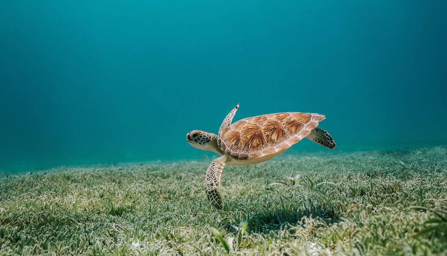 Guide to Sea Turtle Nesting Season [Free Printables]