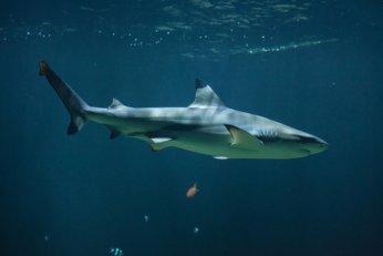 Shark Attack Information