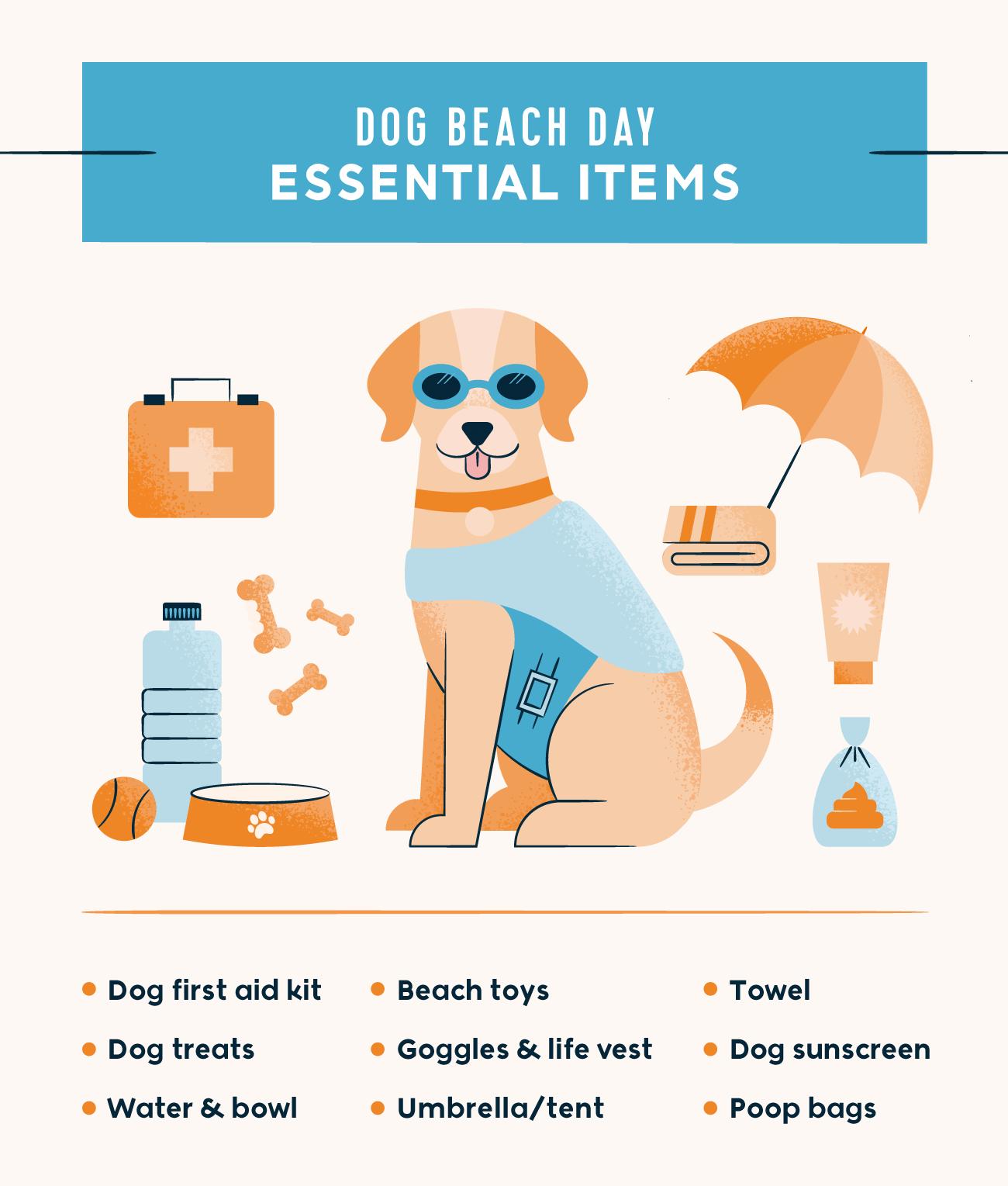 dog beach day essential items