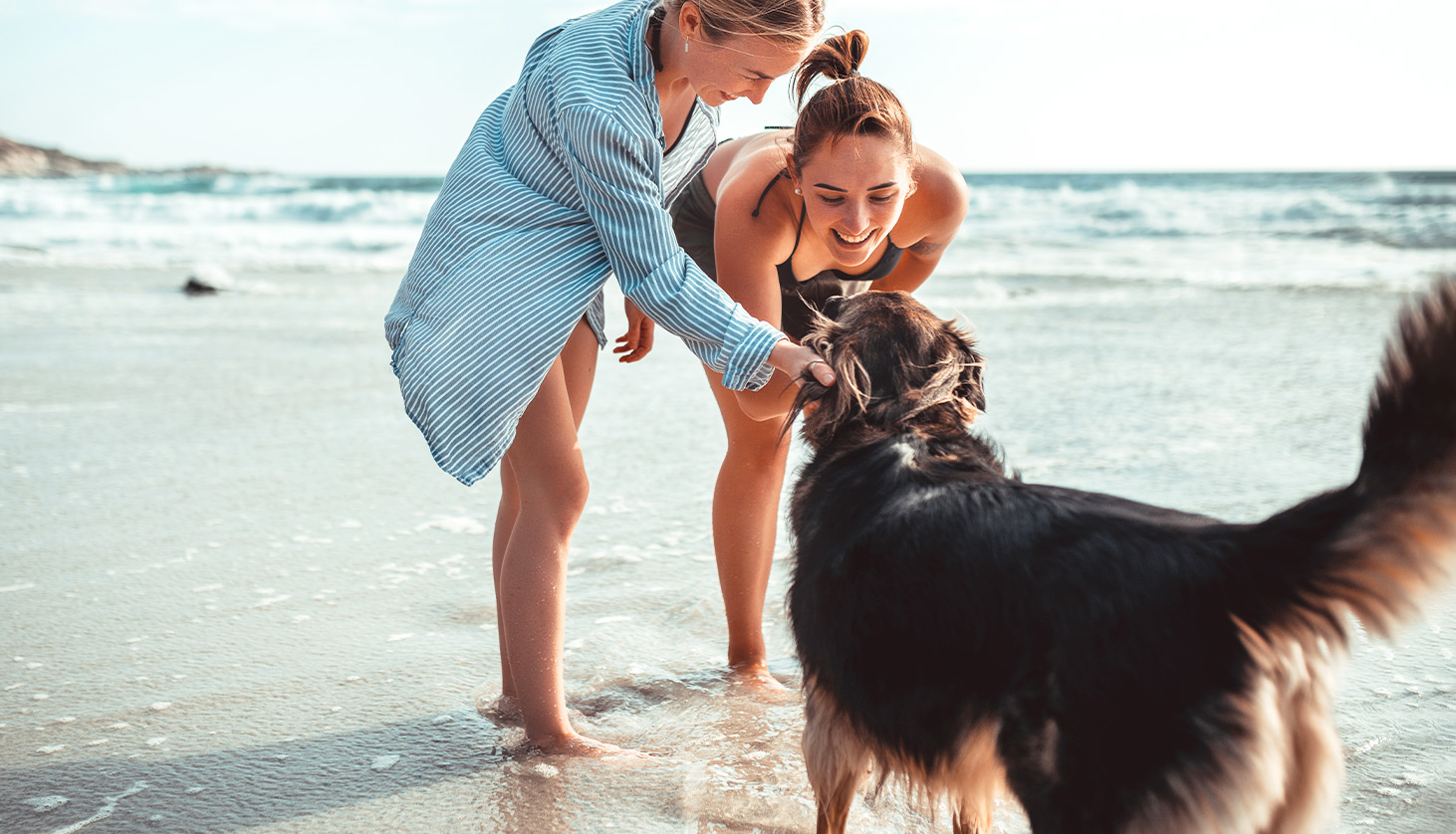 Leash on the Beach: 7 Tips for Taking Your Dog to the Beach