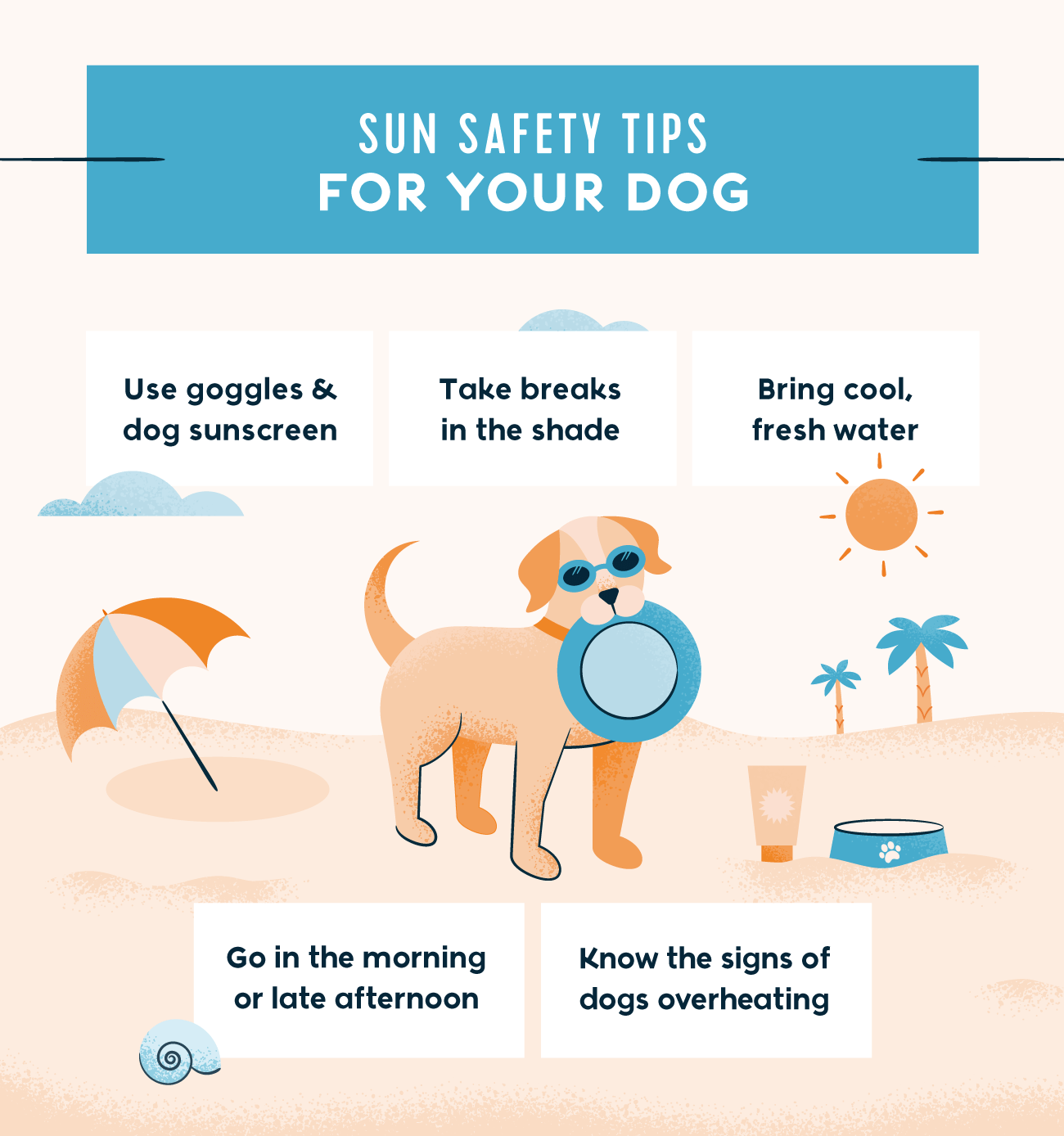 sun safety tips for your dog