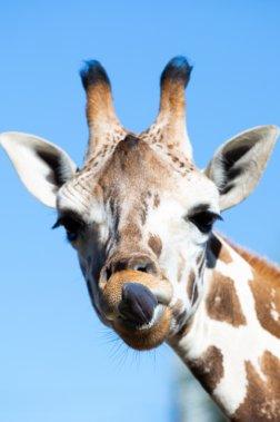 Gulf Breeze Zoo